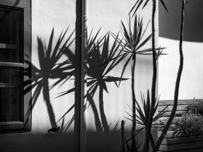 Shadows of Chania